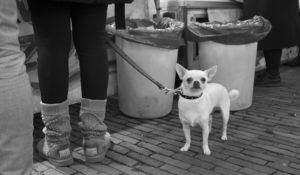 Street Photography Amsterdam 11
